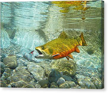 Brook Trout Image Canvas Print - Brook Trout And Artificial Fly by Paul Buggia