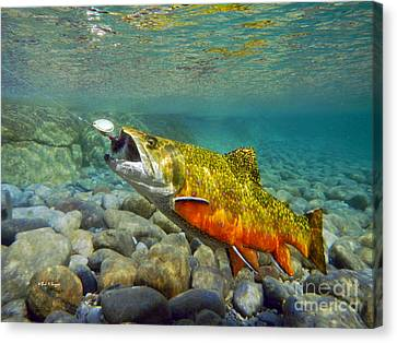 Brook Trout Image Canvas Print - Brook Trout And Mepp's  by Paul Buggia