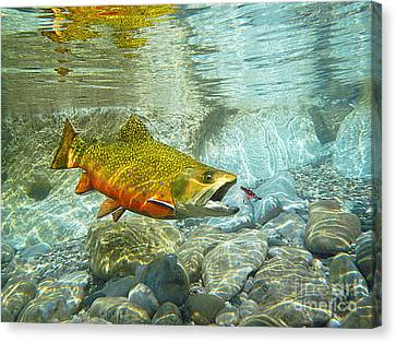 Wet Fly Canvas Print - Brook Trout And Silver Doctor by Paul Buggia