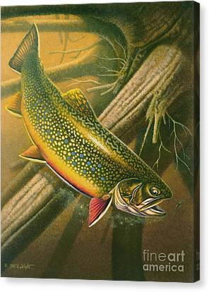 Brook Trout  Hideaway Canvas Print by Jon Q Wright