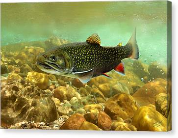 Brook Trout Canvas Print by Matthew Schwartz