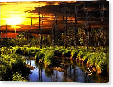 Brookstreet - Sunrise In The Forest Canvas Print