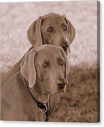 Brothers Canvas Print by Barbara Dudley
