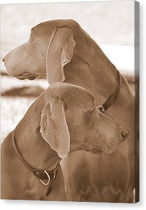 Brothers Ll Canvas Print by Barbara Dudley