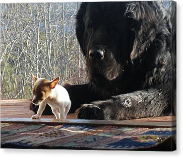 Newfoundlander Canvas Print - Brothers In Claws by Brian Boyle