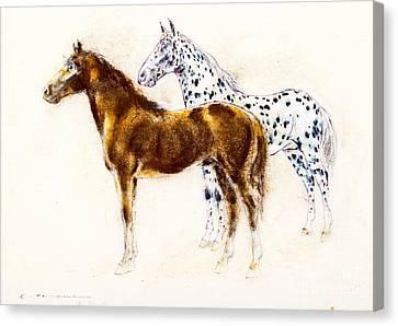 Brown And Appaloosa Horse Canvas Print by Kurt Tessmann