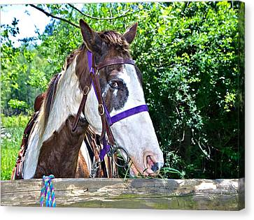 Canvas Print featuring the photograph Brown And White Horse by Susan Leggett