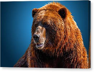 Brown Bear 2 Canvas Print