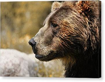 Brown Bear Golden Morning Canvas Print by Dan Sproul