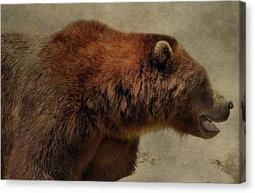 Brown Bear Hunting Canvas Print by Dan Sproul