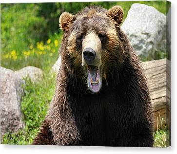 Brown Bear Yawn Canvas Print by Dan Sproul