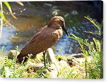 Brown Bird Canvas Print by Aimee L Maher Photography and Art Visit ALMGallerydotcom