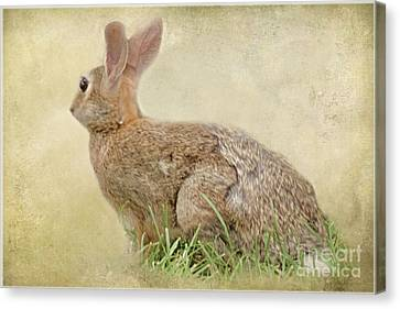 Brown Bunny Canvas Print by Tom York Images