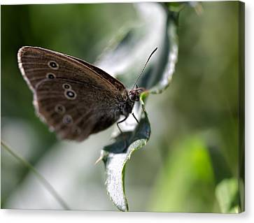 Canvas Print featuring the photograph Brown Butterfly On Leaf by Leif Sohlman