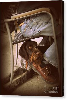 Canvas Print featuring the photograph Brown Dog by Tanya  Searcy