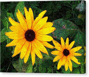Brown Eyed Susan - And Her Daughter Canvas Print by Paul Gioacchini