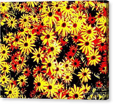 Brown Eyed Susans I Canvas Print