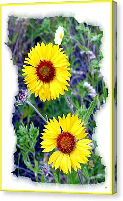 Brown- Eyed Susans Canvas Print