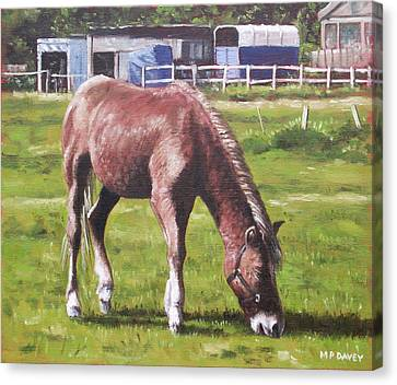 Brown Horse By Stables Canvas Print by Martin Davey