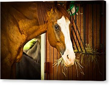 Brown Horse Canvas Print