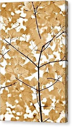 Brown Leaves Melody Canvas Print by Jennie Marie Schell