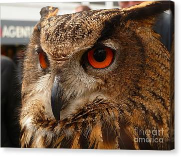 Canvas Print featuring the photograph Brown Owl by Vicki Spindler