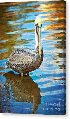 Brown Pelican Along The Bayou Canvas Print by Joan McCool