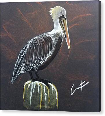 Brown Pelican At Shrimp Dock Canvas Print