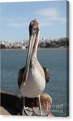 Brown Pelican At The Torpedo Wharf Fising Pier Overlooking The City Of San Francisco 5d21685 Canvas Print