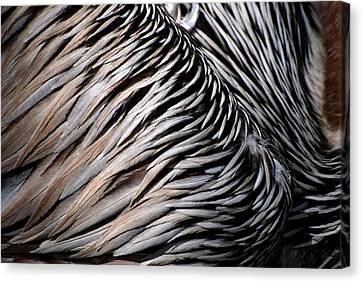 Canvas Print featuring the photograph Brown Pelican Feathers by Lorenzo Cassina