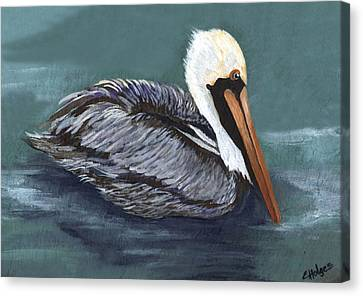 Brown Pelican On Water Canvas Print by Elaine Hodges