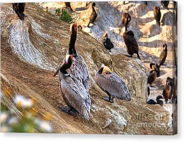 Canvas Print featuring the photograph Brown Pelicans At Rest by Jim Carrell
