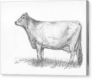 Brown Swiss Dairy Cow Canvas Print by J E Vincent