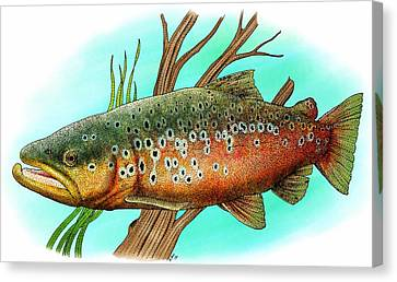 Brown Trout Canvas Print by Roger Hall