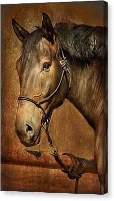 Brownie Canvas Print by Barbara Manis
