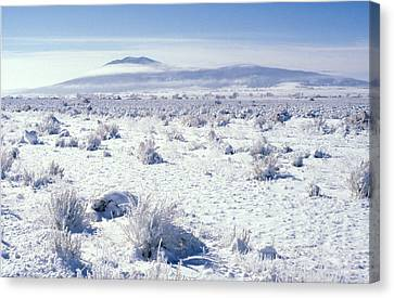 Brrrr 1021 Canvas Print by Brent L Ander