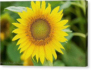 Sunflower Canvas Print by Bruce A Lee