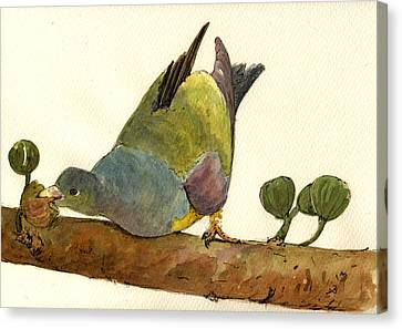 Bruce S Green Pigeon Canvas Print by Juan  Bosco