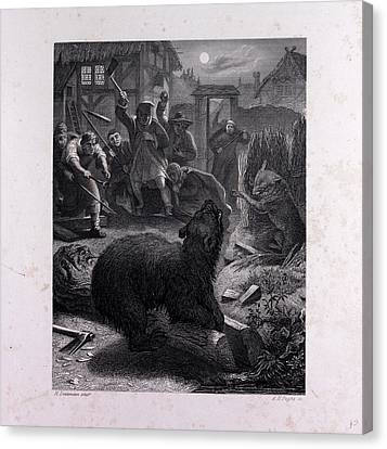 Bruin In The Trap Canvas Print