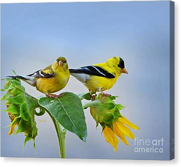 Sunflowers With Goldfinch Canvas Print