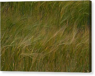 Field Of Crops Canvas Print - Brush Strokes by Odd Jeppesen