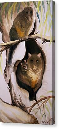 Brush Tail Possum Canvas Print