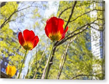 Bryant Park Tulips New York  Canvas Print by Angela A Stanton
