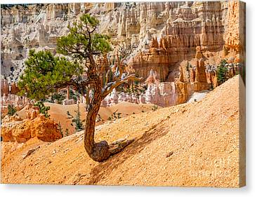 Bryce Canyon Np Canvas Print by Juergen Klust