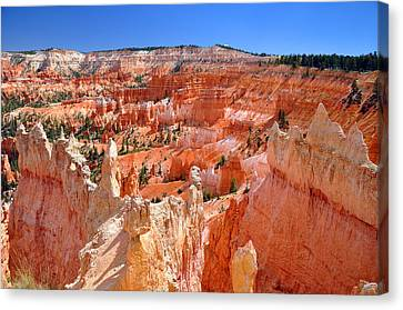 Bryce Canyon Utah Canvas Print by Matthew Chapman