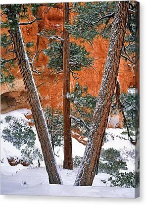 Bryce Winter Canvas Print by Leland D Howard