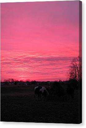 Bubble Gum Sunrise Canvas Print by Carlee Ojeda