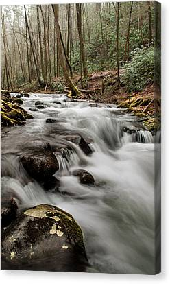 Bubbling Mountain Stream Canvas Print by Debbie Green