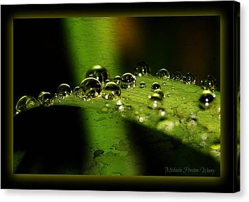 Canvas Print featuring the photograph Bubbly by Michaela Preston