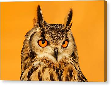 Bubo Bubo Canvas Print by Roeselien Raimond